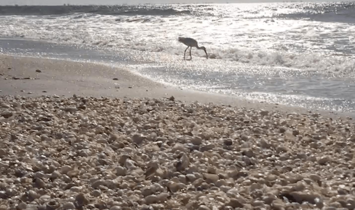 walk shell beach