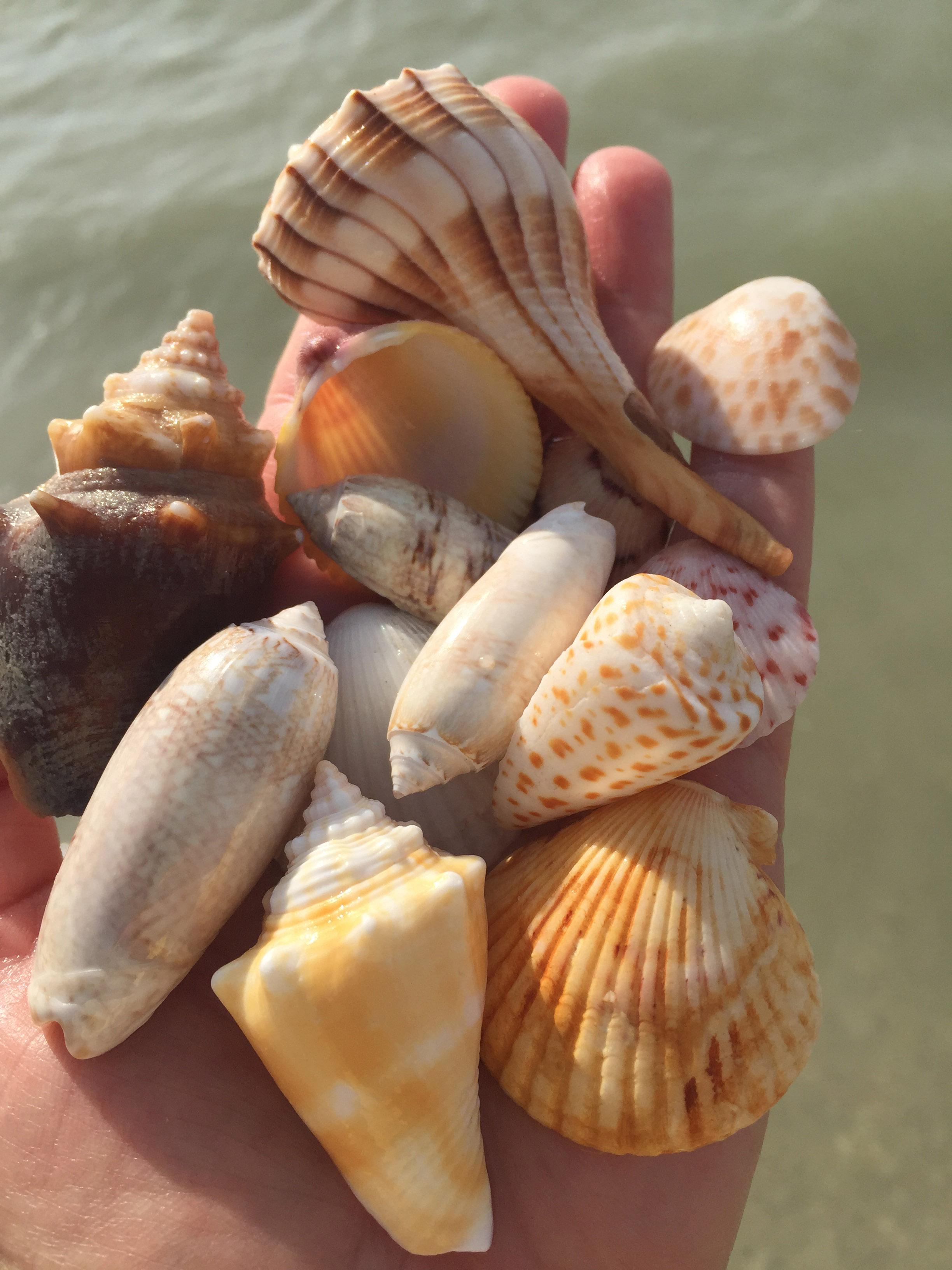 hand full of shells