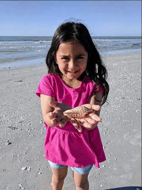 junonia shell found sanibel island sundial resort