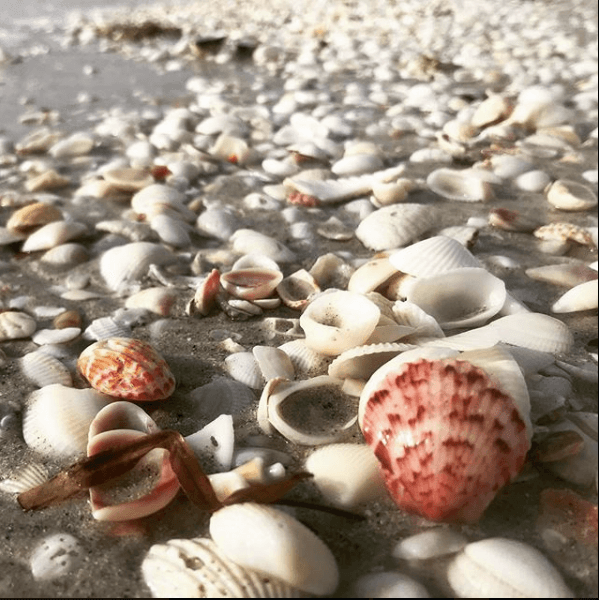 shells on the beach sanibel island