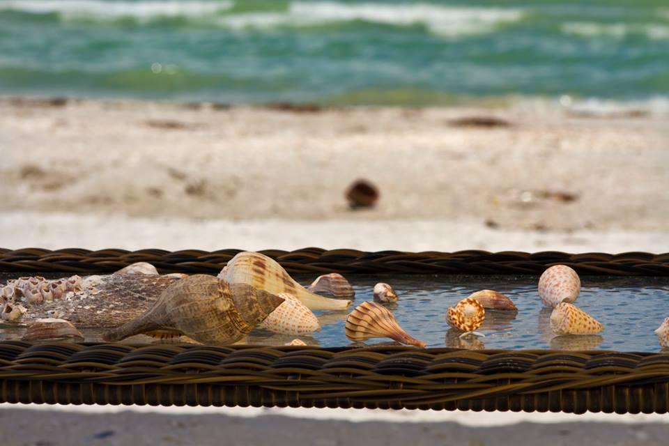 shells collected sundial resort sanibel island
