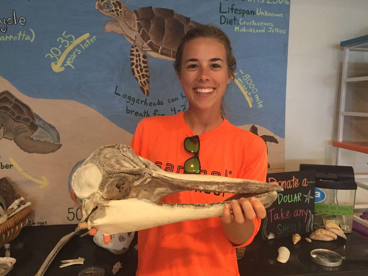 sanibel sea school dolphin skull