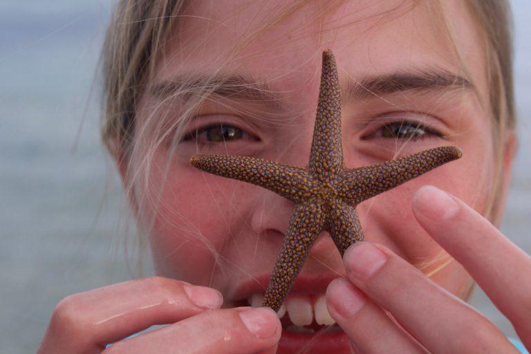spiny sea star sanibel sea school photo