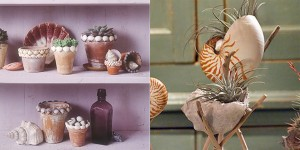 Shell Pots and Planters